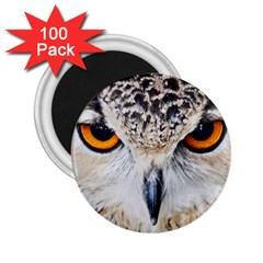 Owl Face 2 25  Magnets (100 Pack)  by Onesevenart