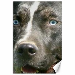 Blue Merle Catahoula Canvas 24  x 36  by TailWags