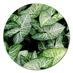 Green Leaves Nature Pattern Plant Magnet 5  (round) by Amaryn4rt