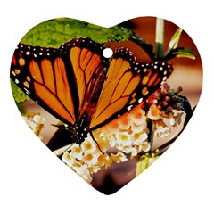 Monarch Butterfly Nature Orange Heart Ornament (two Sides) by Amaryn4rt