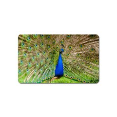Peacock Animal Photography Beautiful Magnet (name Card) by Amaryn4rt