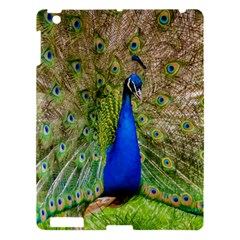 Peacock Animal Photography Beautiful Apple Ipad 3/4 Hardshell Case by Amaryn4rt