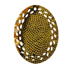Sunflower Bright Close Up Color Disk Florets Oval Filigree Ornament (two Sides) by Amaryn4rt