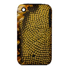 Sunflower Bright Close Up Color Disk Florets Iphone 3s/3gs by Amaryn4rt