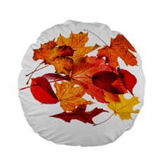 Autumn Leaves Leaf Transparent Standard 15  Premium Flano Round Cushions by Amaryn4rt