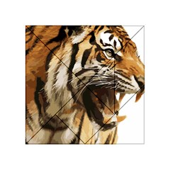 Royal Tiger National Park Acrylic Tangram Puzzle (4  X 4 ) by Amaryn4rt