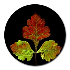 Autumn Beauty Round Mousepads by Nexatart