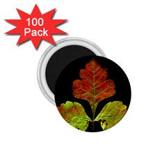 Autumn Beauty 1 75  Magnets (100 Pack)  by Nexatart