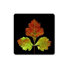 Autumn Beauty Square Magnet by Nexatart
