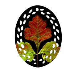 Autumn Beauty Oval Filigree Ornament (two Sides)