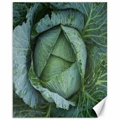 Bright Cabbage Color Dew Flora Canvas 16  X 20