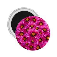 Dahlia Flowers Pink Garden Plant 2 25  Magnets by Nexatart