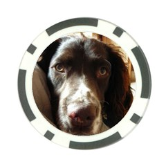 English Springer Spaniel Liver Poker Chip Card Guard (10 pack) by TailWags