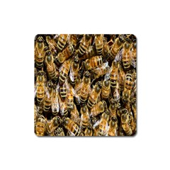 Honey Bee Water Buckfast Square Magnet by Nexatart