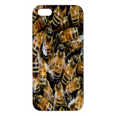 Honey Bee Water Buckfast Apple Iphone 5 Premium Hardshell Case by Nexatart