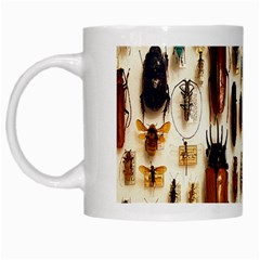 Insect Collection White Mugs by Nexatart