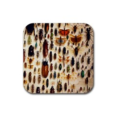 Insect Collection Rubber Square Coaster (4 Pack)  by Nexatart