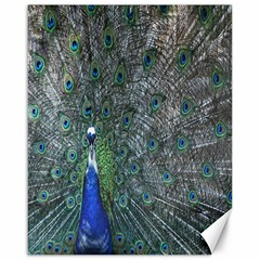 Peacock Four Spot Feather Bird Canvas 16  X 20   by Nexatart