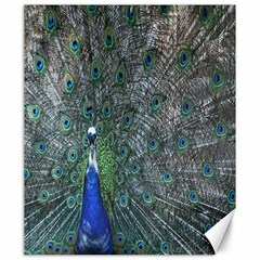 Peacock Four Spot Feather Bird Canvas 20  X 24