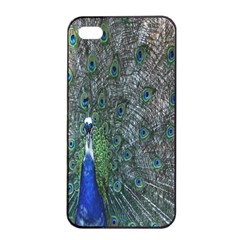 Peacock Four Spot Feather Bird Apple Iphone 4/4s Seamless Case (black) by Nexatart