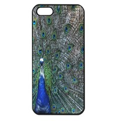 Peacock Four Spot Feather Bird Apple Iphone 5 Seamless Case (black)