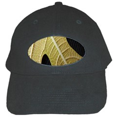 Yellow Leaf Fig Tree Texture Black Cap