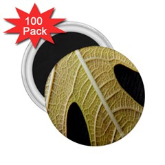 Yellow Leaf Fig Tree Texture 2 25  Magnets (100 Pack)