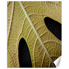 Yellow Leaf Fig Tree Texture Canvas 16  X 20   by Nexatart