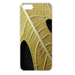 Yellow Leaf Fig Tree Texture Apple Iphone 5 Seamless Case (white)