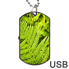 Fern Nature Green Plant Dog Tag Usb Flash (two Sides)