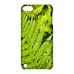 Fern Nature Green Plant Apple Ipod Touch 5 Hardshell Case With Stand