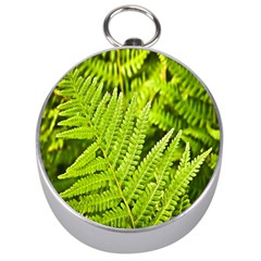 Fern Nature Green Plant Silver Compasses by Nexatart