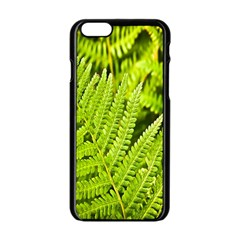 Fern Nature Green Plant Apple Iphone 6/6s Black Enamel Case by Nexatart