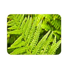 Fern Nature Green Plant Double Sided Flano Blanket (mini)  by Nexatart