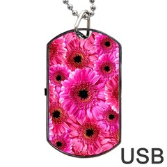 Gerbera Flower Nature Pink Blosso Dog Tag Usb Flash (two Sides) by Nexatart