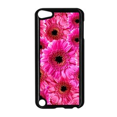 Gerbera Flower Nature Pink Blosso Apple Ipod Touch 5 Case (black)