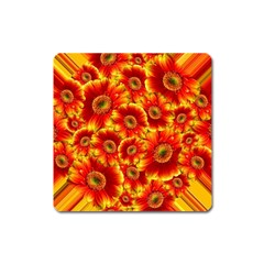 Gerbera Flowers Blossom Bloom Square Magnet by Nexatart
