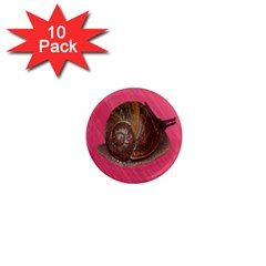 Snail Pink Background 1  Mini Magnet (10 pack)  by Nexatart