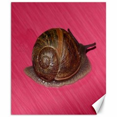 Snail Pink Background Canvas 8  X 10
