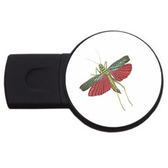 Grasshopper Insect Animal Isolated Usb Flash Drive Round (2 Gb) by Nexatart