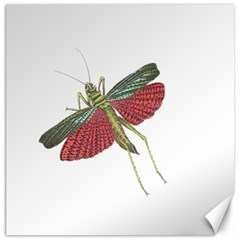 Grasshopper Insect Animal Isolated Canvas 12  X 12   by Nexatart