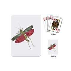 Grasshopper Insect Animal Isolated Playing Cards (mini)