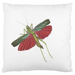 Grasshopper Insect Animal Isolated Large Cushion Case (two Sides)