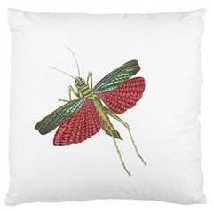 Grasshopper Insect Animal Isolated Large Flano Cushion Case (two Sides) by Nexatart