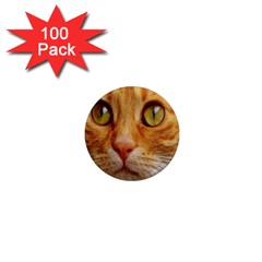 Cat Red Cute Mackerel Tiger Sweet 1  Mini Magnets (100 Pack)