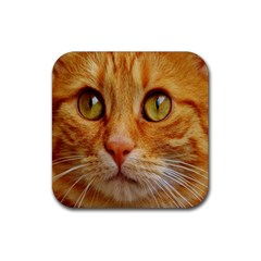Cat Red Cute Mackerel Tiger Sweet Rubber Coaster (square)  by Nexatart