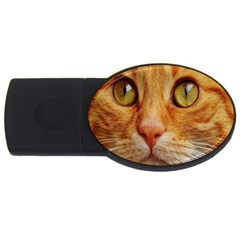 Cat Red Cute Mackerel Tiger Sweet Usb Flash Drive Oval (2 Gb) by Nexatart