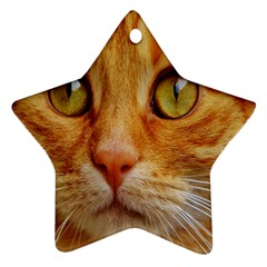Cat Red Cute Mackerel Tiger Sweet Star Ornament (two Sides) by Nexatart