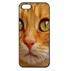 Cat Red Cute Mackerel Tiger Sweet Apple Iphone 5 Seamless Case (black) by Nexatart