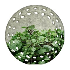 Plants Against Concrete Wall Background Ornament (round Filigree) by dflcprints